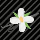 daisys, flower, organic flower, vanila, vanilla flower icon