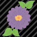aroma ingredient, flower, flower fragrance, geranium, spa essentials icon