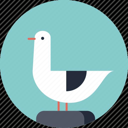 bird, gull, media, ocean, sea, seabird, seagull, social, tourism, travel, twitter, vacation icon
