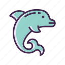 dolphin, dolphin show