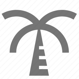 palm tree, tree icon
