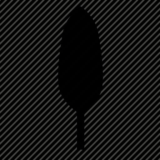 deciduous, nature, poplar, tree icon
