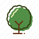 forest, nature, tree, wood