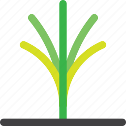 agriculture, farm, forest, grow, nature, palm, tree icon