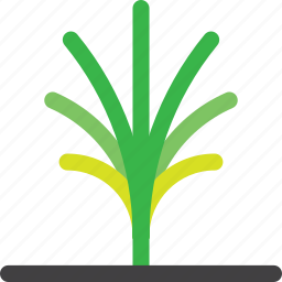 environment, farm, forest, grow, nature, palm, tree icon