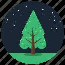 forest, nature, night, plant, stars, tree, trees