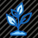 garden, growing, plant, seedling