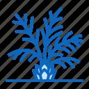 palm, plant, tree icon