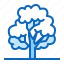 deciduous, forest, oak, plant, tree icon
