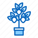 fruit, lemon, plant, seedling, tree icon