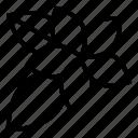 hibiscus, flower, botanical, blossom, nature