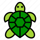 amphibian, animal, reptile, tropical, turtle