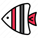 animal, fish, sea, seafish, tropical