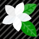 floral, flower, plant, plumeria, tropical icon
