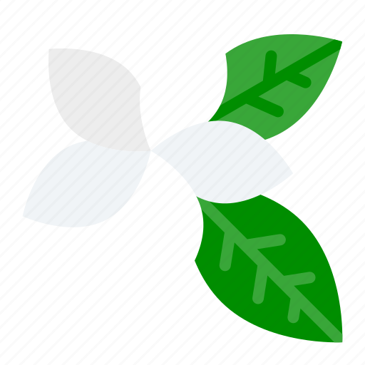 floral, flower, plant, plumeria, tropical icon