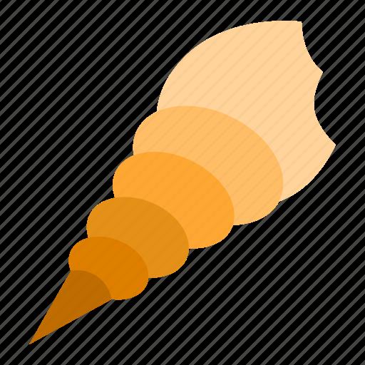 animal, seashell, shell, tropical icon