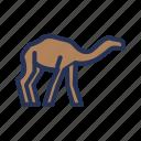 animal, camel, color, outline, ramadan, tukicon