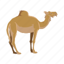 animal, camel, cartoon, desert, tourism, travel, turkey icon