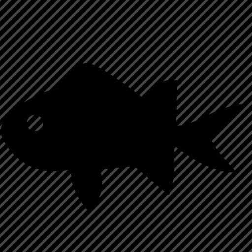 aquarium, decorative, fish, young icon