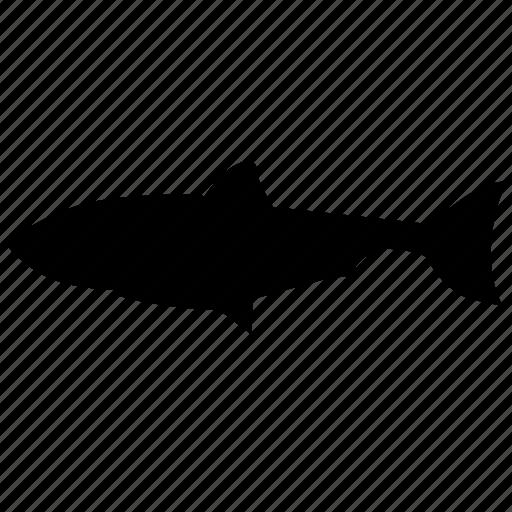 fish, food, herring, river icon