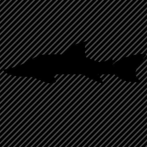 fish, food, predator, sturgeon icon