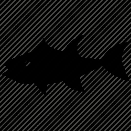 fish, ocean, predator, sea, tuna icon