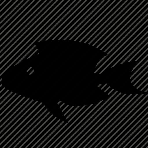 aquarium, decorative, fish, sea, small icon