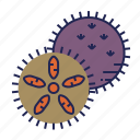 fish, food, food icon, sea, seafood, underwater, urchin icon