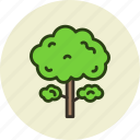 ecology, forest, park, tree icon