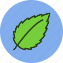 ecology, fresh, leaf, nature, news icon