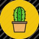 cactus, plant, pot