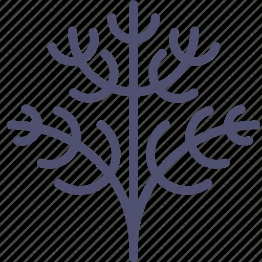dill, fennel, food, herb, parsley, plant icon