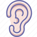 anatomy, ear