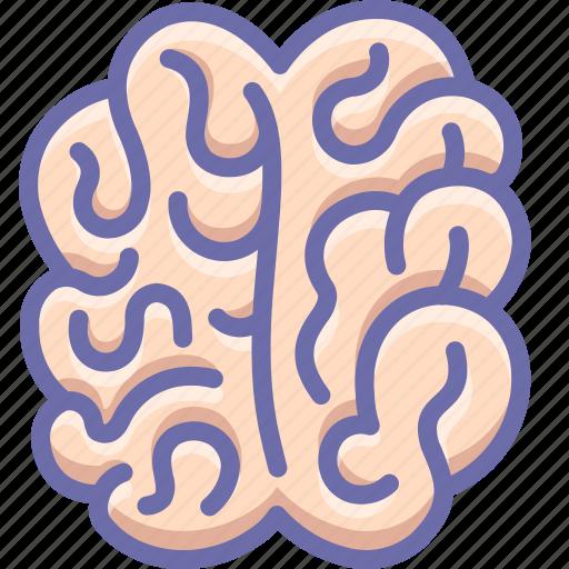 anatomy, brain, mind icon