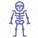anatomy, skeleton, skull icon