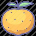citrus, fruit, mandarine