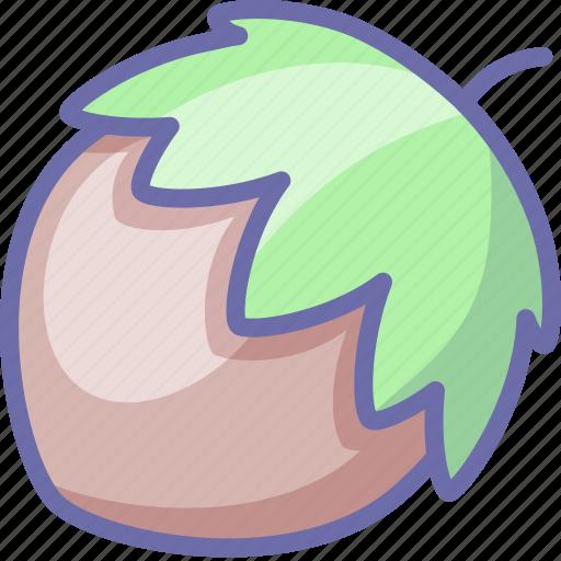 hazelnut, nut icon