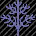 dill, fennel, parsley icon