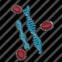 rna, ribonucleic acid, biology, genetic, dna, helix, covid-19