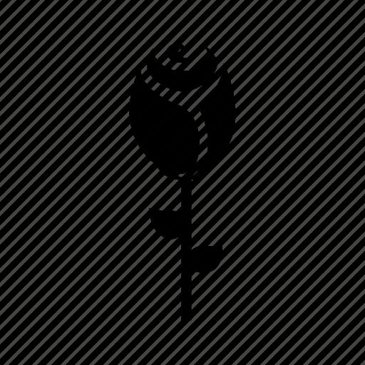 day, flower, gift, present, rose, valentine icon