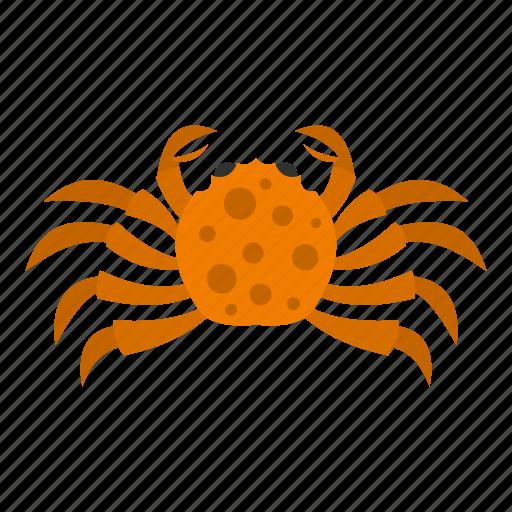 animal, claw, crab, ocean, orange, sea, seafood icon
