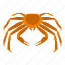 animal, claw, crab, ocean, orange, sea, seafood