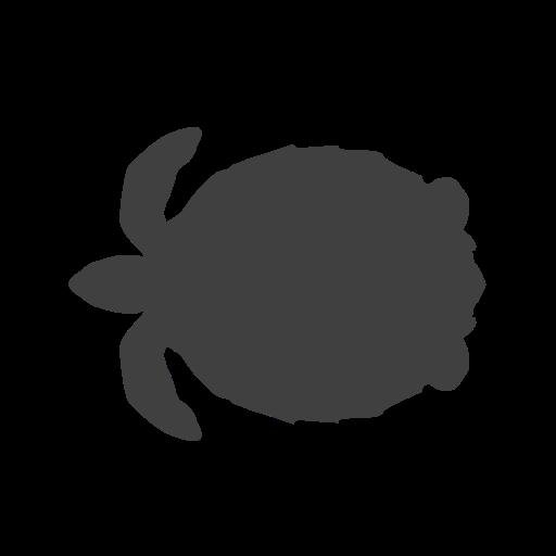 endangered, sea turtle, turtle icon