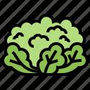 cauliflower, culinary, ingredient, organic, vegetable