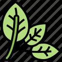 ingredient, leaves, organic, spinach, vegetable