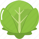 cabbage, cook, cooking, kitchen, restaurant, vegetable, vegetables icon
