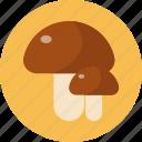 food, food health, mushroom, vegetable