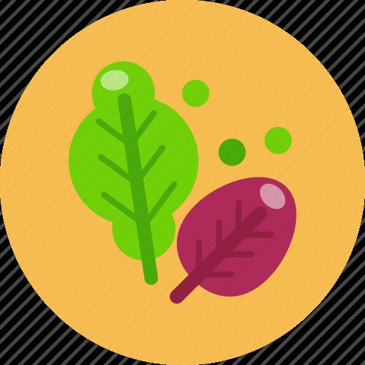 food, food health, salad, vegetable icon