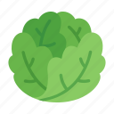 colour, food, green, iceberg, lettuce, salad, vegetable icon