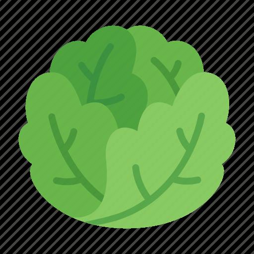 colour, food, green, iceberg, lettuce, salad, vegetable icon